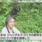 濱田岳・森泉ガチ対面 密林ゴリラと伝説海獣~いのちの星の親子たち~ 20160130