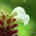 世界遺産「世界を変えたシンガポールの植物園」 20160131