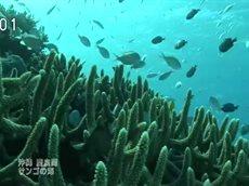 海底の花園 サンゴの美~沖縄 慶良間諸島~ ※一部地域は放送休止 20160201