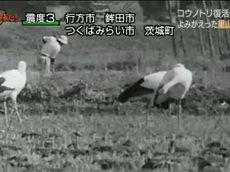 ダーウィンが来た!「日本中の空へ!コウノトリ復活最前線」 20160207