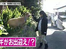 かながわ旬菜ナビ「すかなごっそ発!横須賀の名品・珍品」 20160208