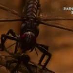 地球ドラマチック「巨大昆虫はなぜ絶滅したのか」 20160312