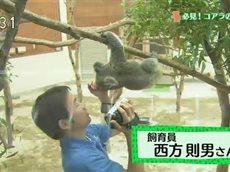 とっておき!動物の仲間たち「飛んだ!走った!コアラの素顔」 20160321