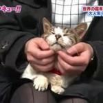トコトン掘り下げ隊!生き物にサンキュー!!3時間スペシャル 20160323