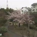 LOVEかわさき「かわさきの春探し」 20160326