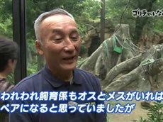 ザ・ドキュメンタリー「ゴリラがいなくなる日」 20160327