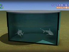 地球ドラマチック・選「サメ 水族館に届けます」 20160402