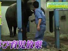 ペットの王国 ワンだランド 日本初!アフリカ象の人工哺育に成功した飼育員に密着 20160403