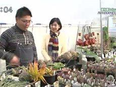 手づくり花づくり「不思議な形をした植物」 20160407