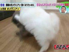 超かわいい!ネコ&イヌの赤ちゃん大集合!! 20160408