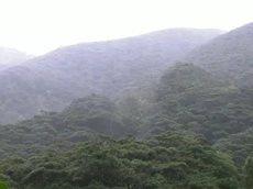 さわやか自然百景「鹿児島 奄美大島 早春」 20160414