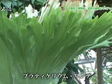 手づくり花づくり「園長おすすめ!温室のオモシロ植物」 20160421