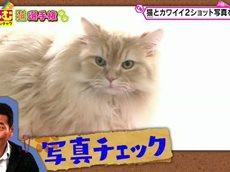 くりぃむナンチャラ 20160422