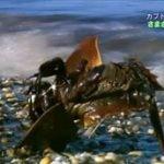地球ドラマチック「生きた化石 カブトガニ~知られざる太古の力~」 20160430