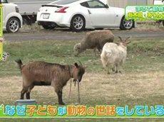 ペットの王国 ワンだランド 動物園のような保育園!?▽犬と仲良しな大型肉食動物 20160501