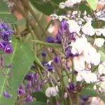 手づくり花づくり「明るく元気に!南半球の植物たち」 20160505
