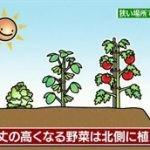 団塊スタイル「健康でお得!家庭菜園」 20160506