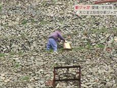 ごはんジャパン 本物を探す旅へ~愛媛県宇和島 絶景の段々畑で育つ新ジャガ~ 20160507