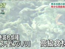 NHKニュース おはよう日本 20160508 0700