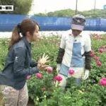 かながわ旬菜ナビ「体感・食感♪ 横浜青葉~都筑」 20160508