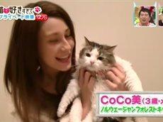 SMAP×SMAP PRESENTSやっぱり猫が好きすぎて 芸能人ねこ自慢グランプリ 20160523