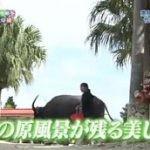 1×8いこうよ!▽15周年視聴率を獲るぞツアーin沖縄⑥夢の島・竹富島弾丸めぐり 20160601