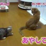 トコトン掘り下げ隊!生き物にサンキュー!!【犬・ネコ新生活SP】 20160601