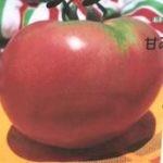 手づくり花づくり「おすすめ野菜とサツマイモ」 20160609