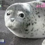 こんにちは!動物の赤ちゃん★夏2015「水族館のカワイイ大集合」 20160615