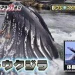 仰天パニックシアター~まさかの瞬間ビビる99連発!!~ 20160623