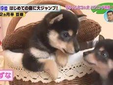 かわいい赤ちゃん大集合!どうぶつBANG!! 20160624