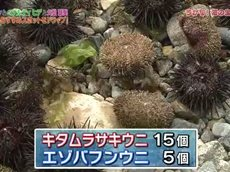 ドラGO!【さかなクン&ヒデ&久松郁実「北三陸ドライブ」】 20160626