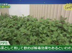 ピエール瀧のしょんないTV「はじめての雑草」 20160627