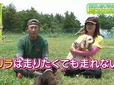 ペットの王国 ワンだランド ドッグスポーツの優勝犬が失明…その妹が大会に挑む 20160703