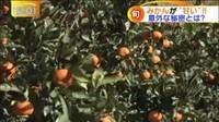 ゆうがたサテライト【安いだけじゃない…驚きのスーパーが登場!】 20161216