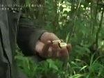 情熱大陸【松田一希/テングザルなぜ鼻が長い?若き研究者の新たな挑戦を追う!】 20161211