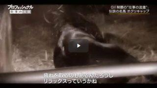 プロフェッショナル 仕事の流儀 特別企画「競走馬・オグリキャップ」 20170213