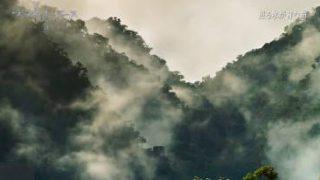 プラネットアースⅡ 第2集「熱帯の森 ひしめく命」 20170330