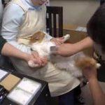 """ザ・ドキュメンタリー「猫ブームの裏側 """"ワケあり""""猫の行く先は」 20170402"""