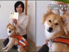 NEWS ZERO 巨額詐欺…62歳女の巧妙手口とは▽板谷由夏 20170419