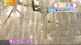 ゆうがたサテライト【農業が楽しい!「子ども畑」ってナニ?】 20170505