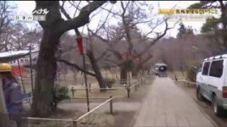 プロフェッショナル 仕事の流儀「桜咲く、人で咲く~樹木医・和田博幸~」 20170605