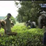 人生デザイン U-29「お茶農家」 20170627
