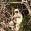 世界遺産「マダガスカル 純白のサルが飛ぶ針の岩山」 20170709