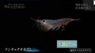 NHKスペシャル シリーズ ディープ・オーシャン▽南極 深海に巨大生物を見た 20170716
