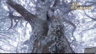 """大捜索ドキュメント! 屋久島""""伝説の超巨大杉"""" 20170816"""