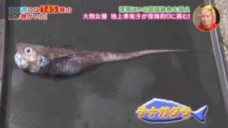 日曜ビッグ「東京湾大調査!お魚ぜんぶ獲ってみた~深海500mカメラ仕掛けたら~」 20170917