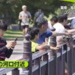 NEWS ZERO ポイント不正入手で龍角散を爆買い…中国人男ら逮捕▽桐谷美玲 20170919