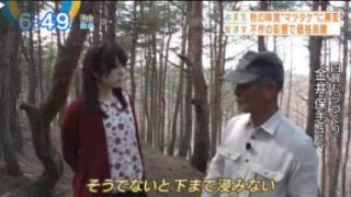 Newsモーニングサテライト【マツタケの価格に異変!】 20170929