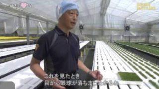 """ハートネットTV「農業と福祉が出会ったとき何が起きる?▽""""農福連携""""の可能性」 20171116"""